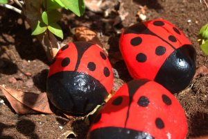 חיפושיות לגינה