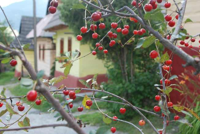 צולם בכפר המשומר Vlkolínec
